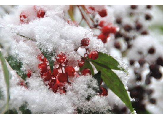Snowpocalypse 2