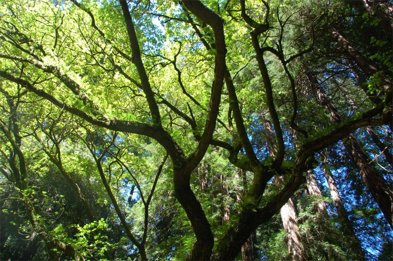 Vertical_tree