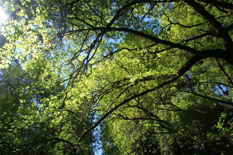 Horizontal_tree